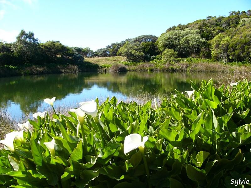 Le piton de l 39 eau - Plantes qui poussent dans l eau ...