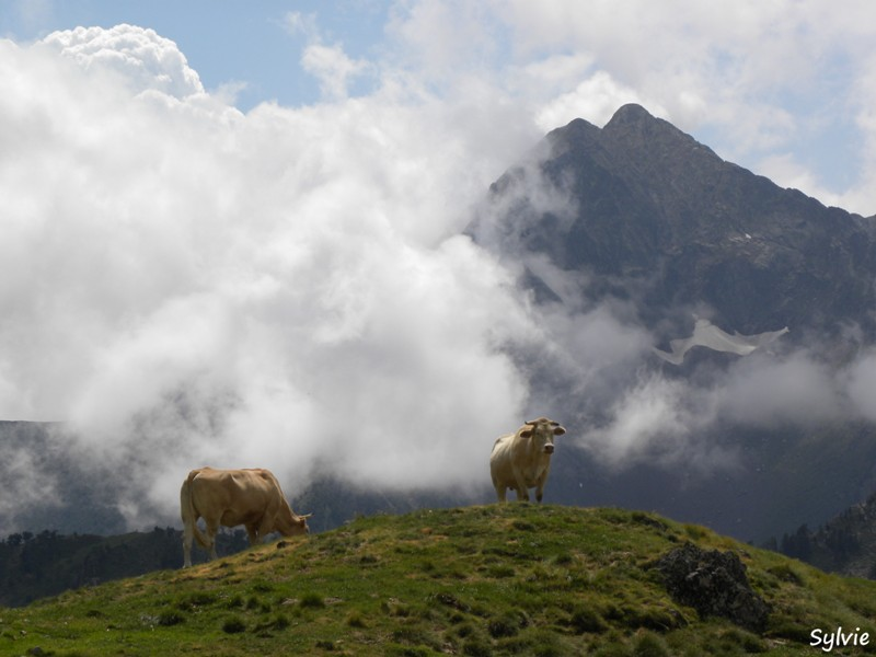 sommaire-hautes-pyrenees