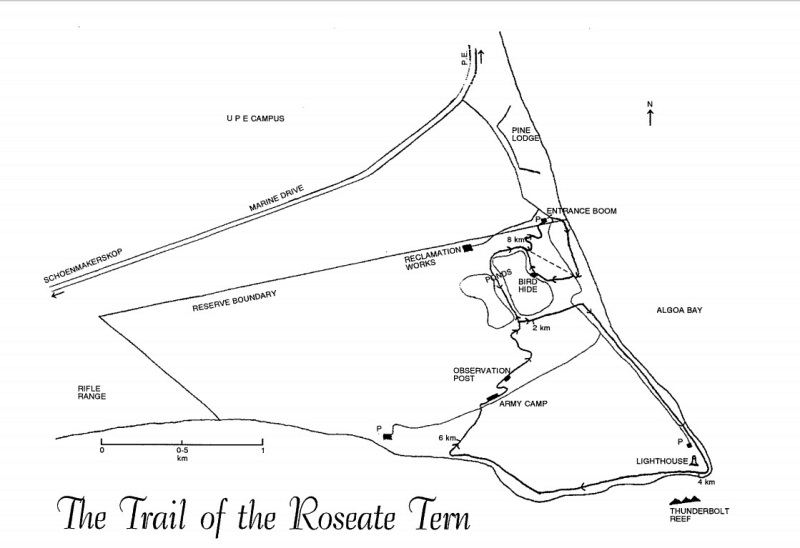plan roseate tern hiking trail